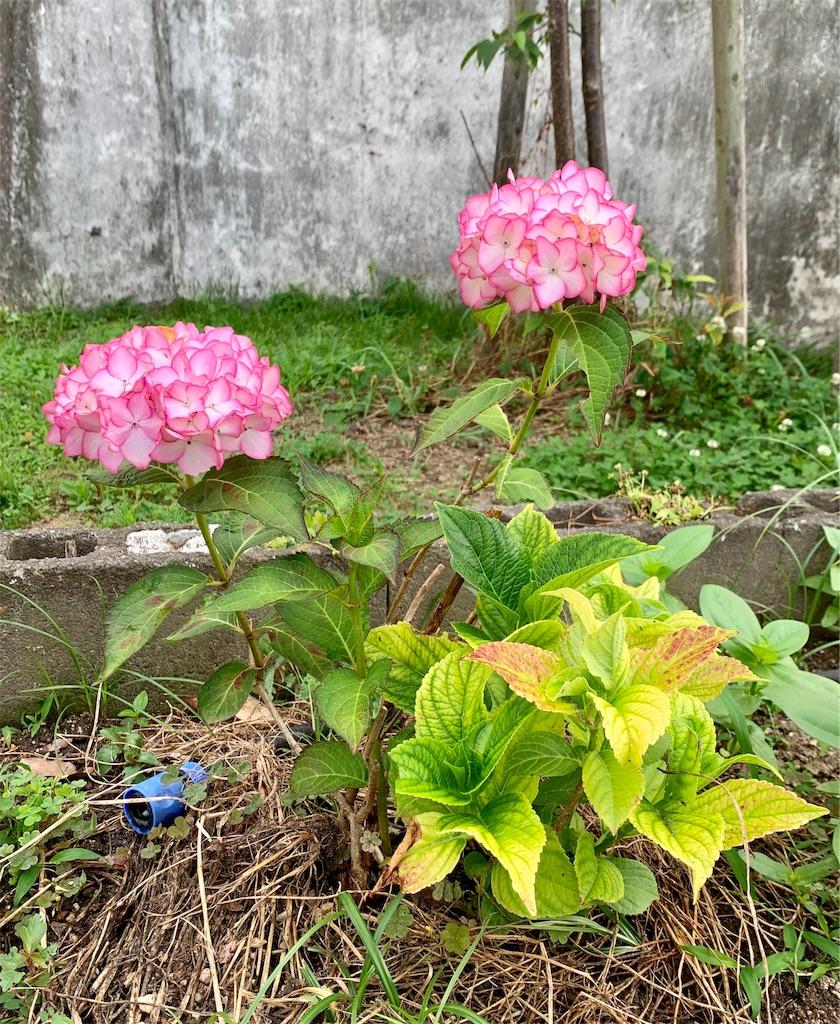 f:id:fukugawa-es:20200604134626j:image