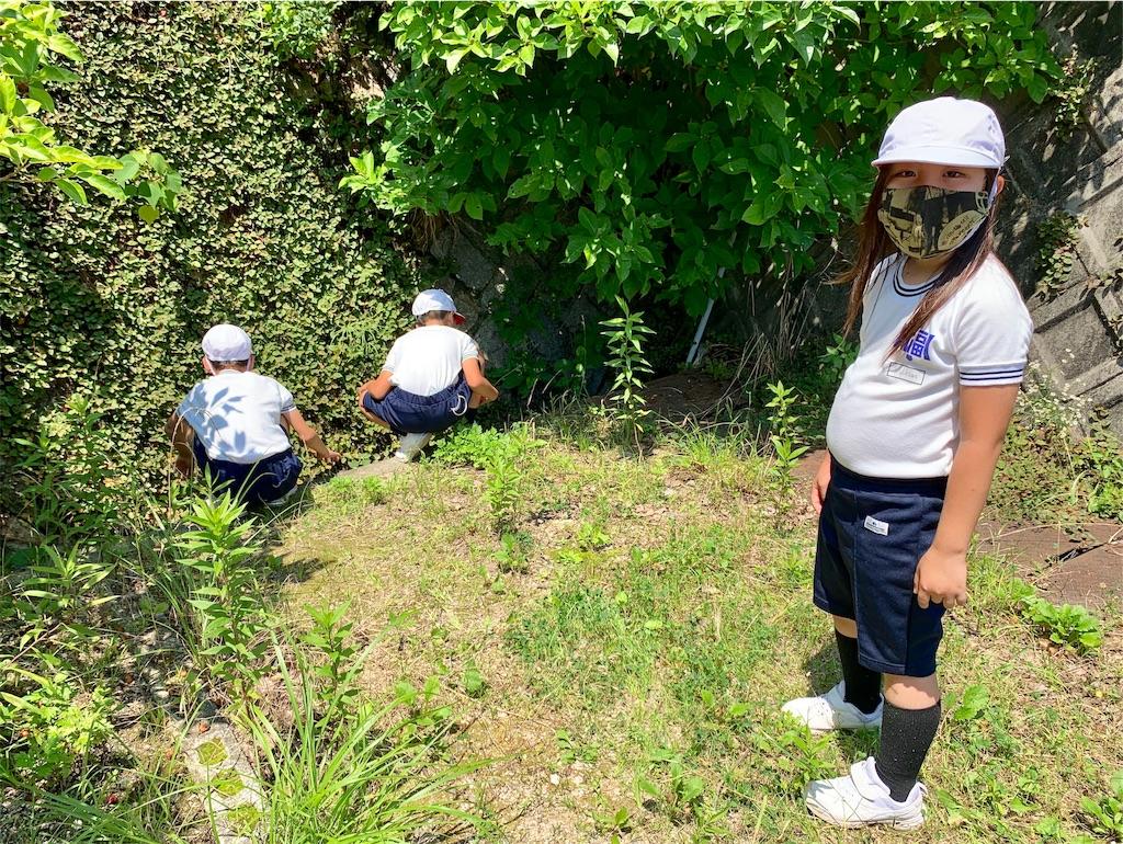 f:id:fukugawa-es:20200717141927j:image