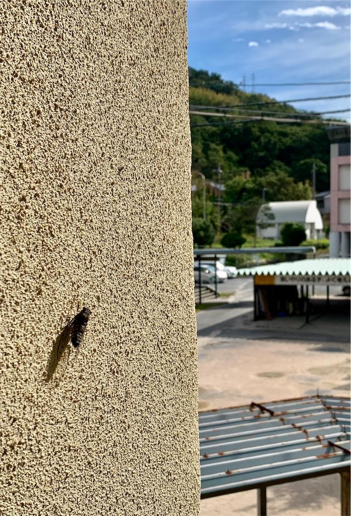 f:id:fukugawa-es:20200914102749j:image