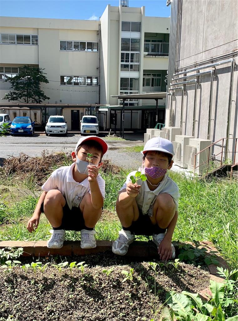 f:id:fukugawa-es:20200925111836j:image