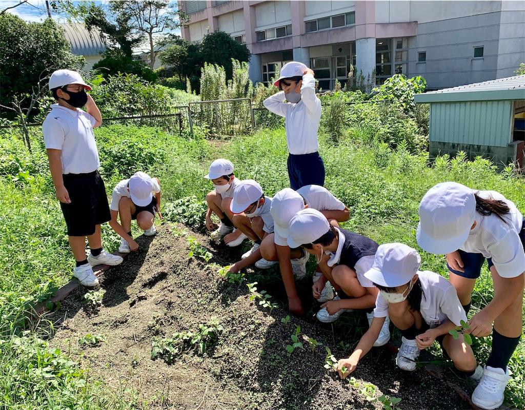 f:id:fukugawa-es:20200925111840j:image