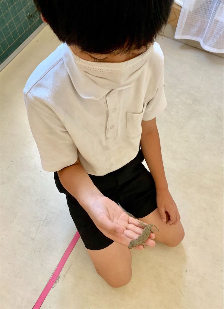f:id:fukugawa-es:20200925133338j:image