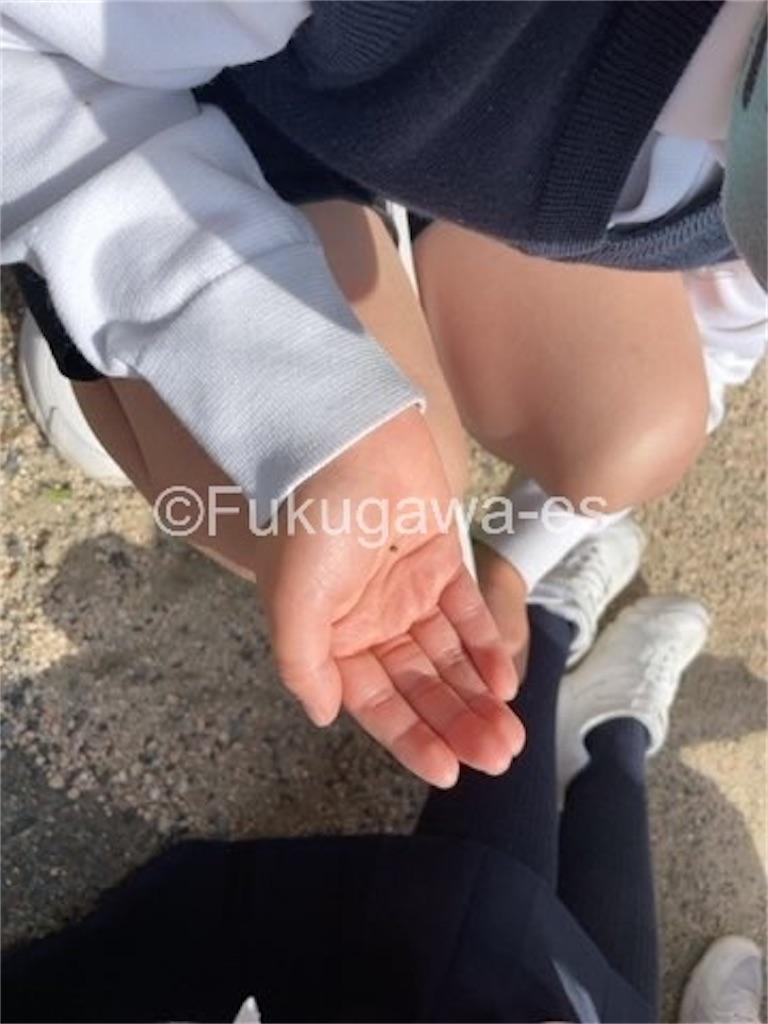 f:id:fukugawa-es:20210510124316j:image