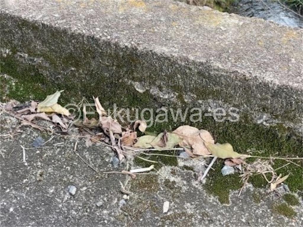 f:id:fukugawa-es:20211011113140j:image
