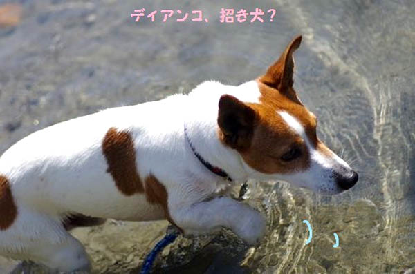 f:id:fukuichrin:20170803235420j:plain