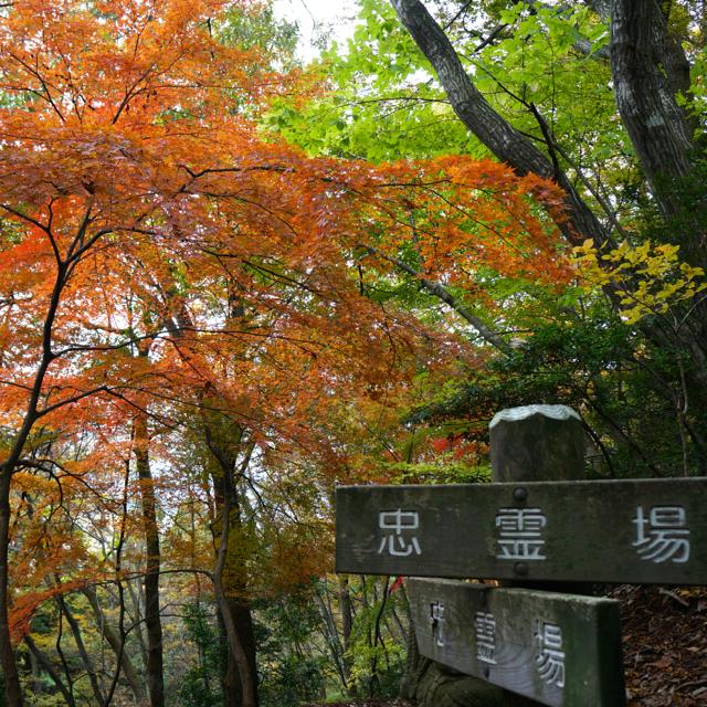 f:id:fukuitabi:20161117081104j:plain