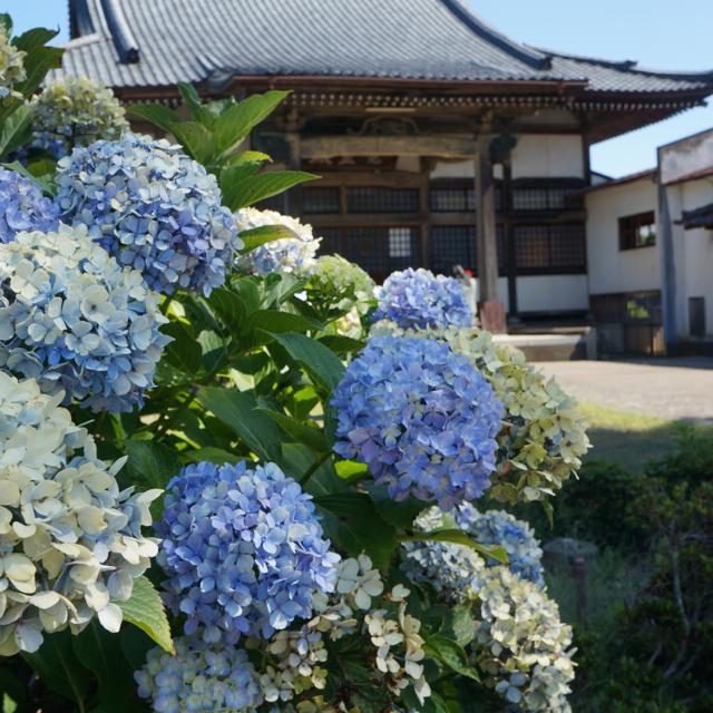 f:id:fukuitabi:20170722174725j:plain