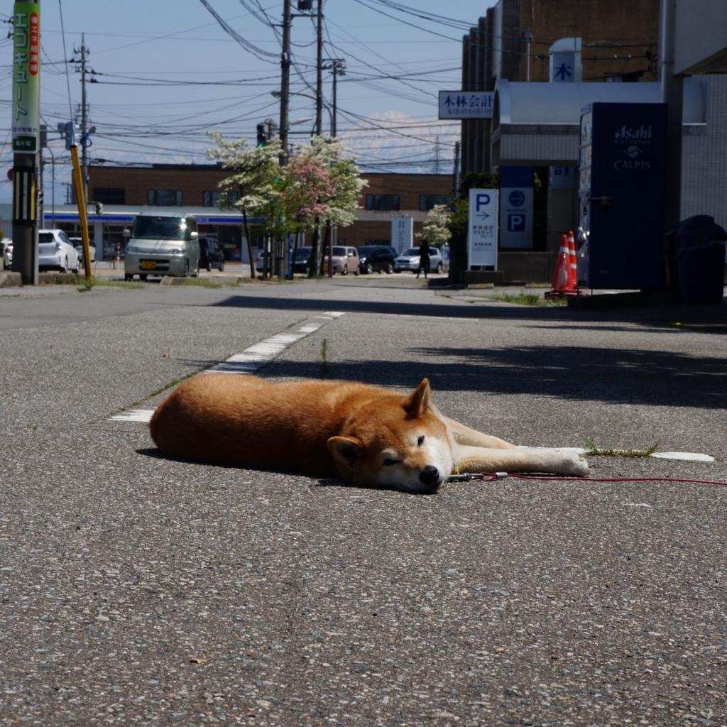 f:id:fukuitabi:20180422083033j:plain