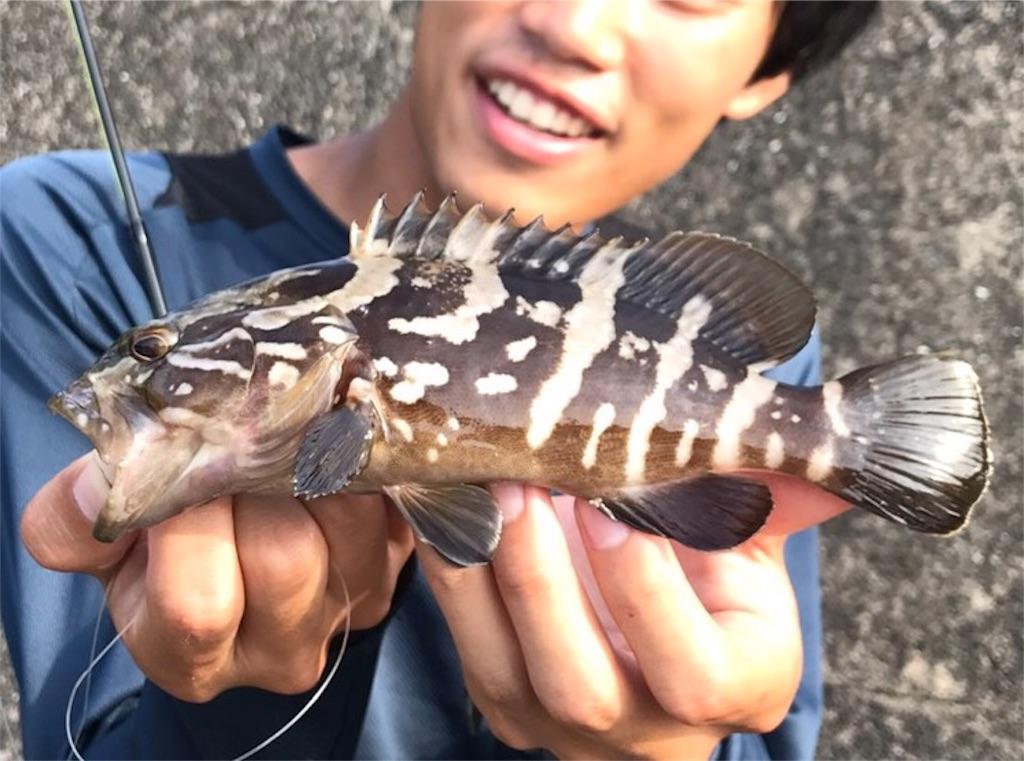 f:id:fukuiyuta:20170724135859j:image