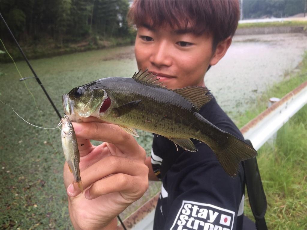 f:id:fukuiyuta:20170919104816j:plain