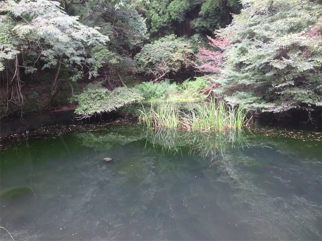 f:id:fukuiyuta:20170919114547j:plain