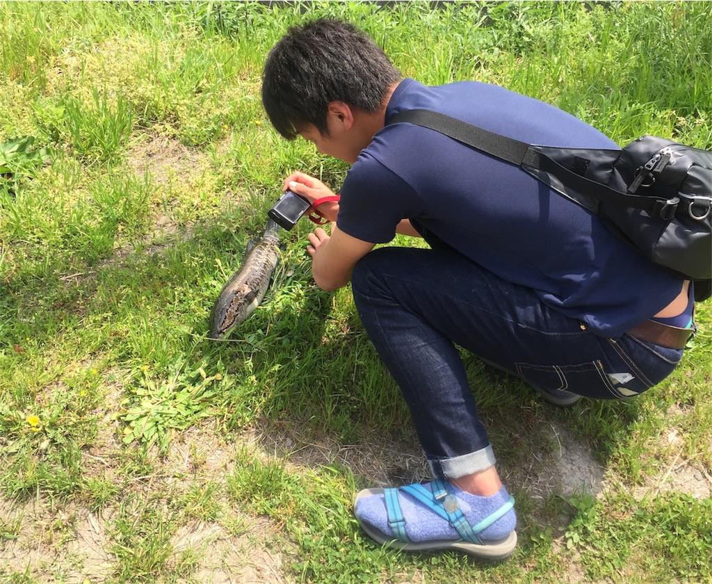 f:id:fukuiyuta:20180423154715j:image