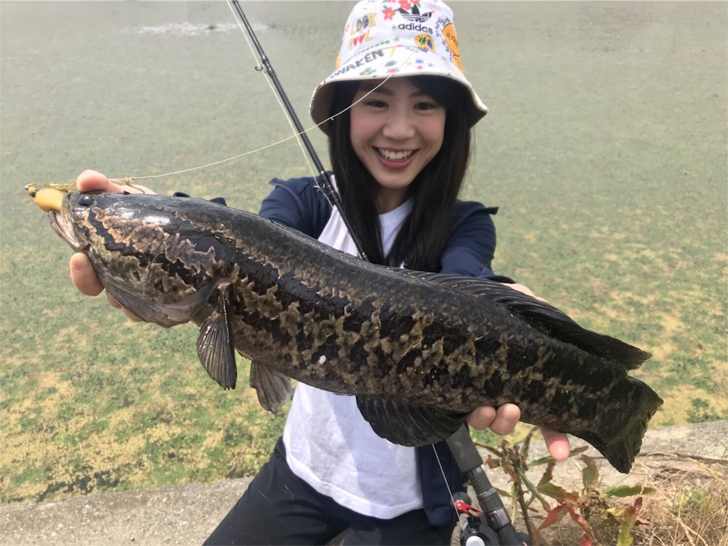f:id:fukuiyuta:20180530102547j:image