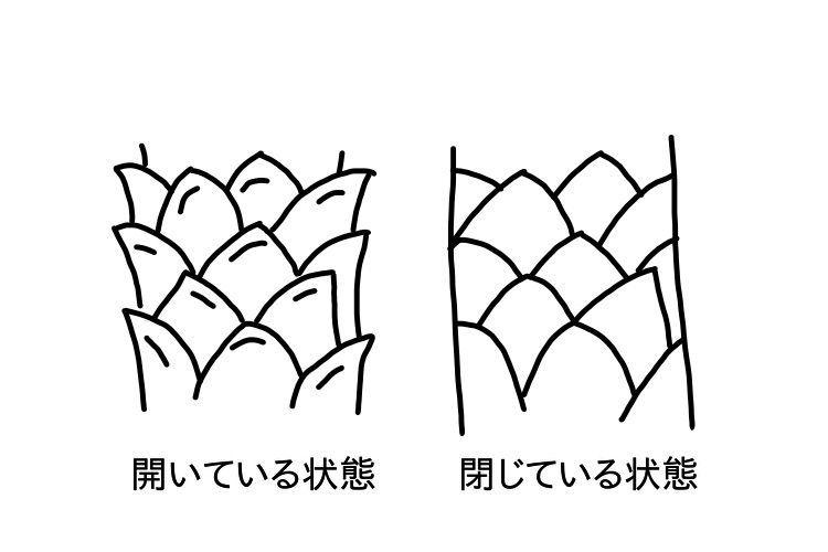 f:id:fukujipaisen:20210301233256j:image