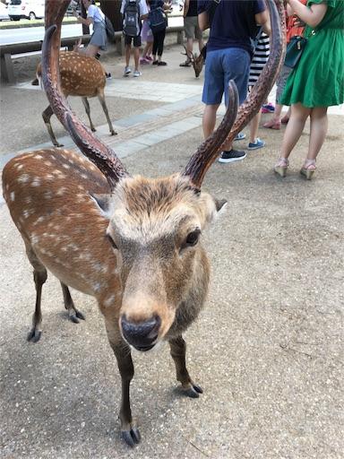 f:id:fukunohitoritabi:20170813222614j:image