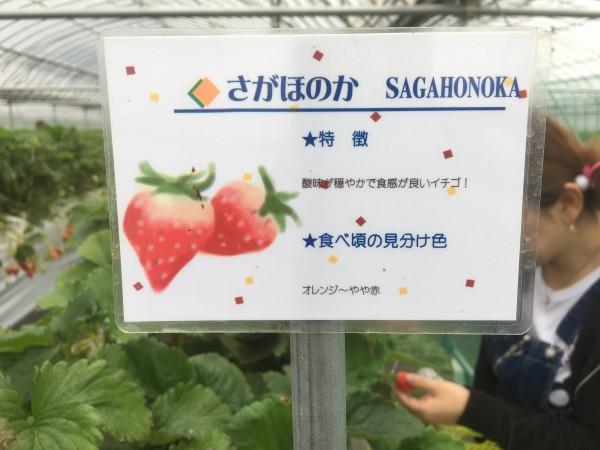 f:id:fukuokabotch:20180414225548j:plain