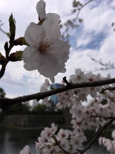 f:id:fukuokanoyuki:20170409150338j:image