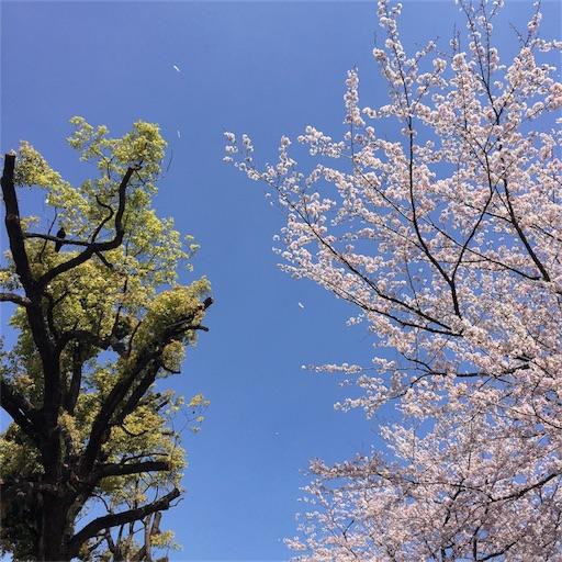 f:id:fukuokanoyuki:20170414055301j:image