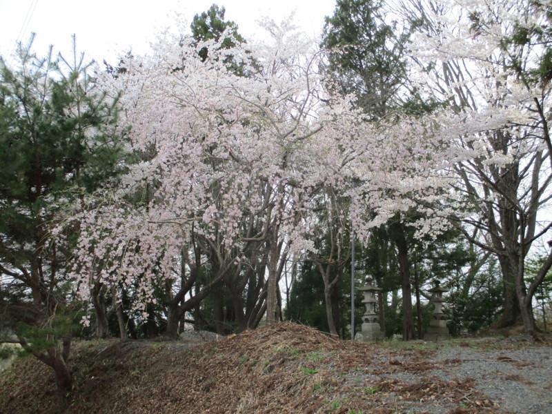 f:id:fukushima-straw:20180406161730j:image