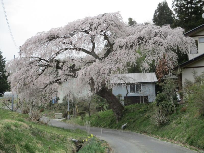 f:id:fukushima-straw:20180406163419j:image