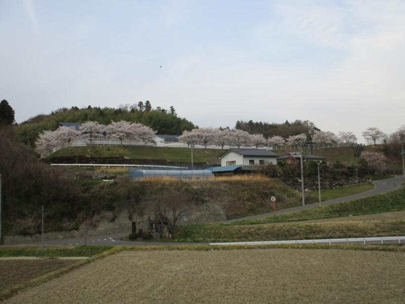 f:id:fukushima-straw:20180406163611j:image