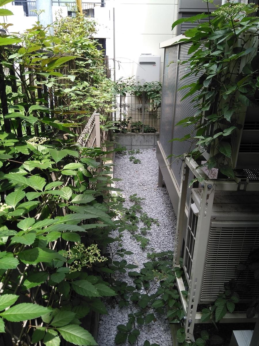 f:id:fukusunosaifu:20200812082444j:plain
