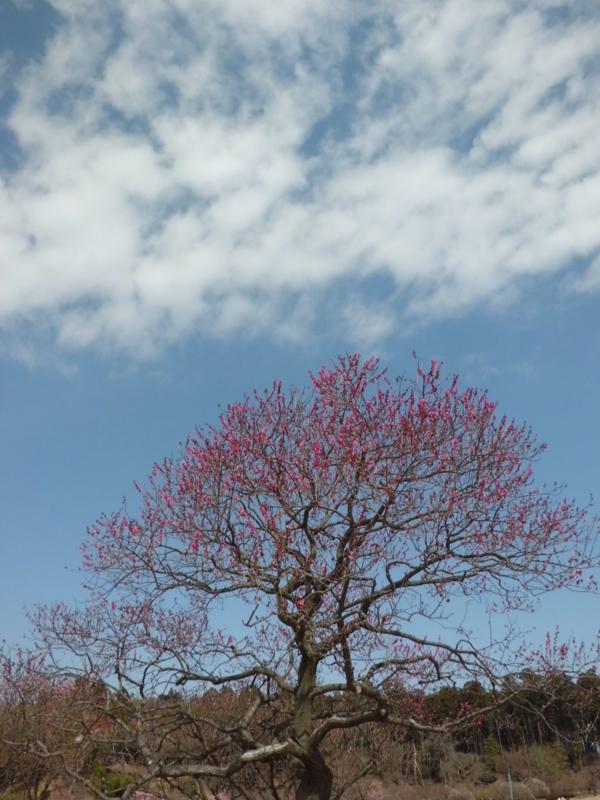 f:id:fukutani2323:20130323102442j:image:w230