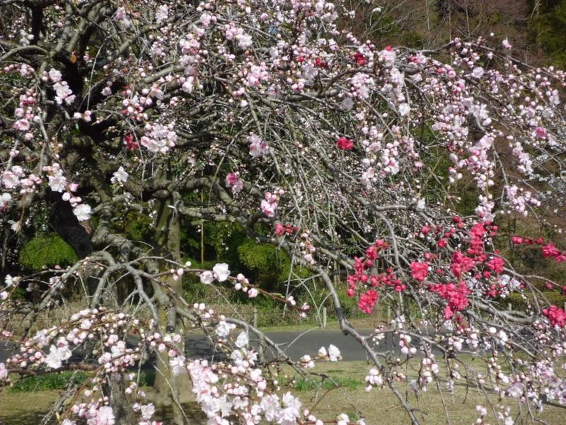 f:id:fukutani2323:20130401085126j:image:w360