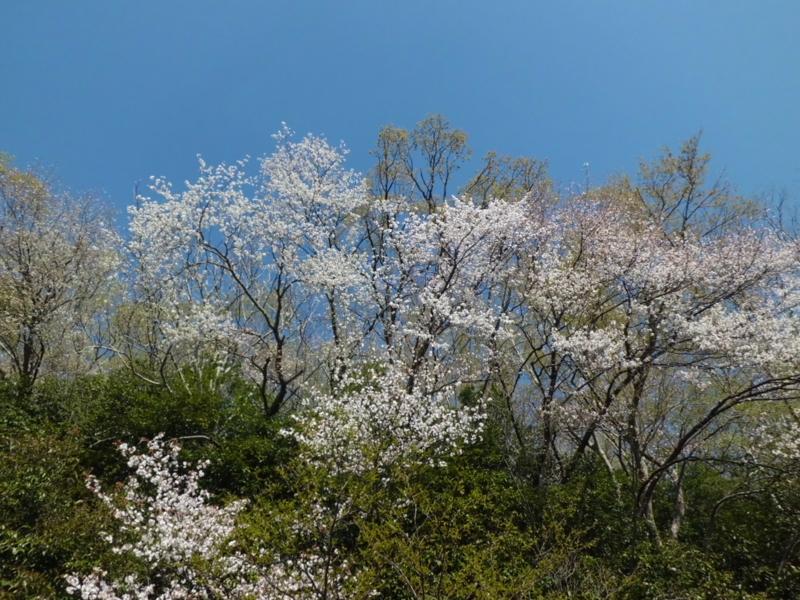 f:id:fukutani2323:20130412081134j:image:w230