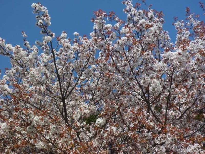 f:id:fukutani2323:20130412084443j:image:w230