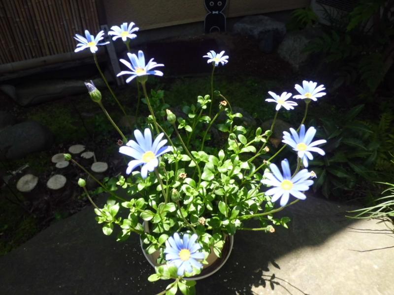 f:id:fukutani2323:20130531112755j:image:w230