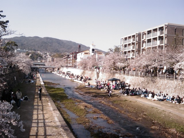 芦屋川は、まだまだ!さくら祭り中。