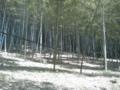竹の子山ナウ。