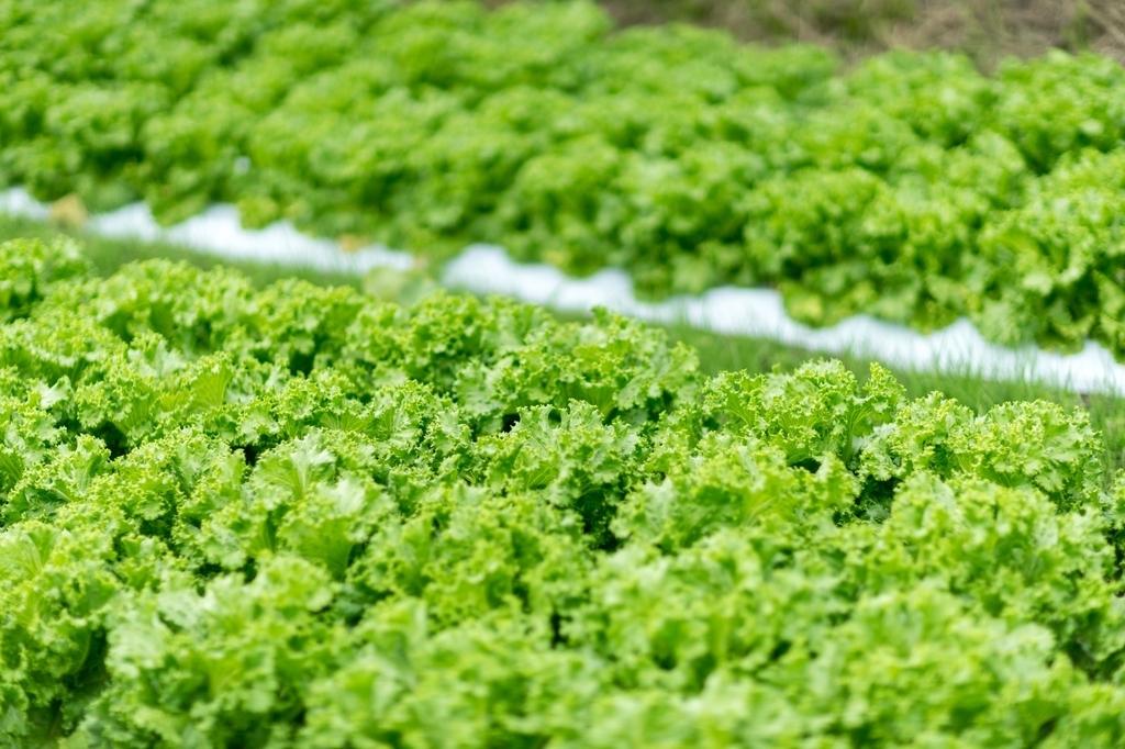 野菜 自動 AI  水やり 肥料 屋内