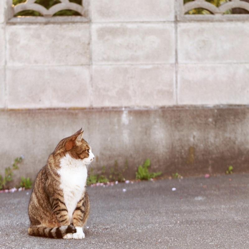 散歩 猫 自由