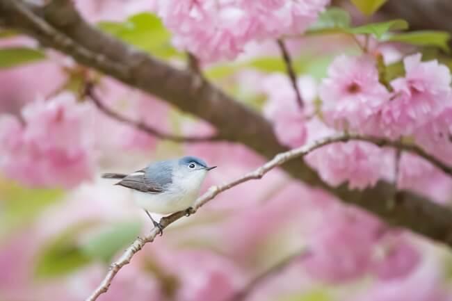 幸福の青い鳥