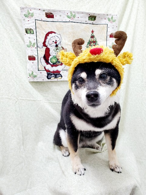 f:id:fulsdog:20201226191042j:image