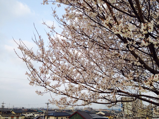 f:id:fumihiro1192:20150322092813j:plain