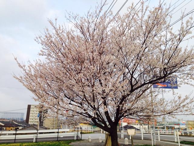f:id:fumihiro1192:20150322093635j:plain