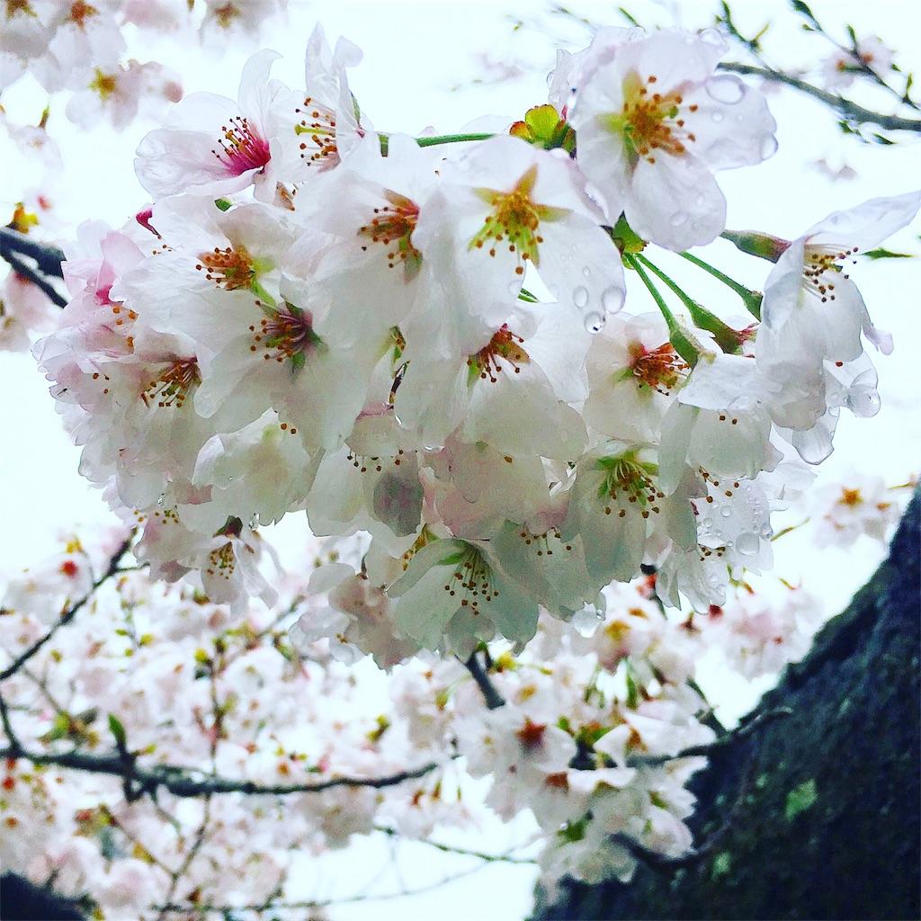 f:id:fumihiro1192:20170408175254j:image