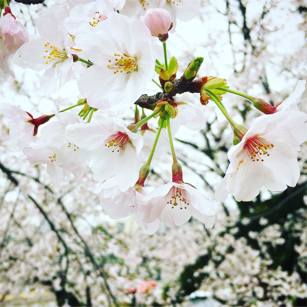 f:id:fumihiro1192:20170408175347j:image