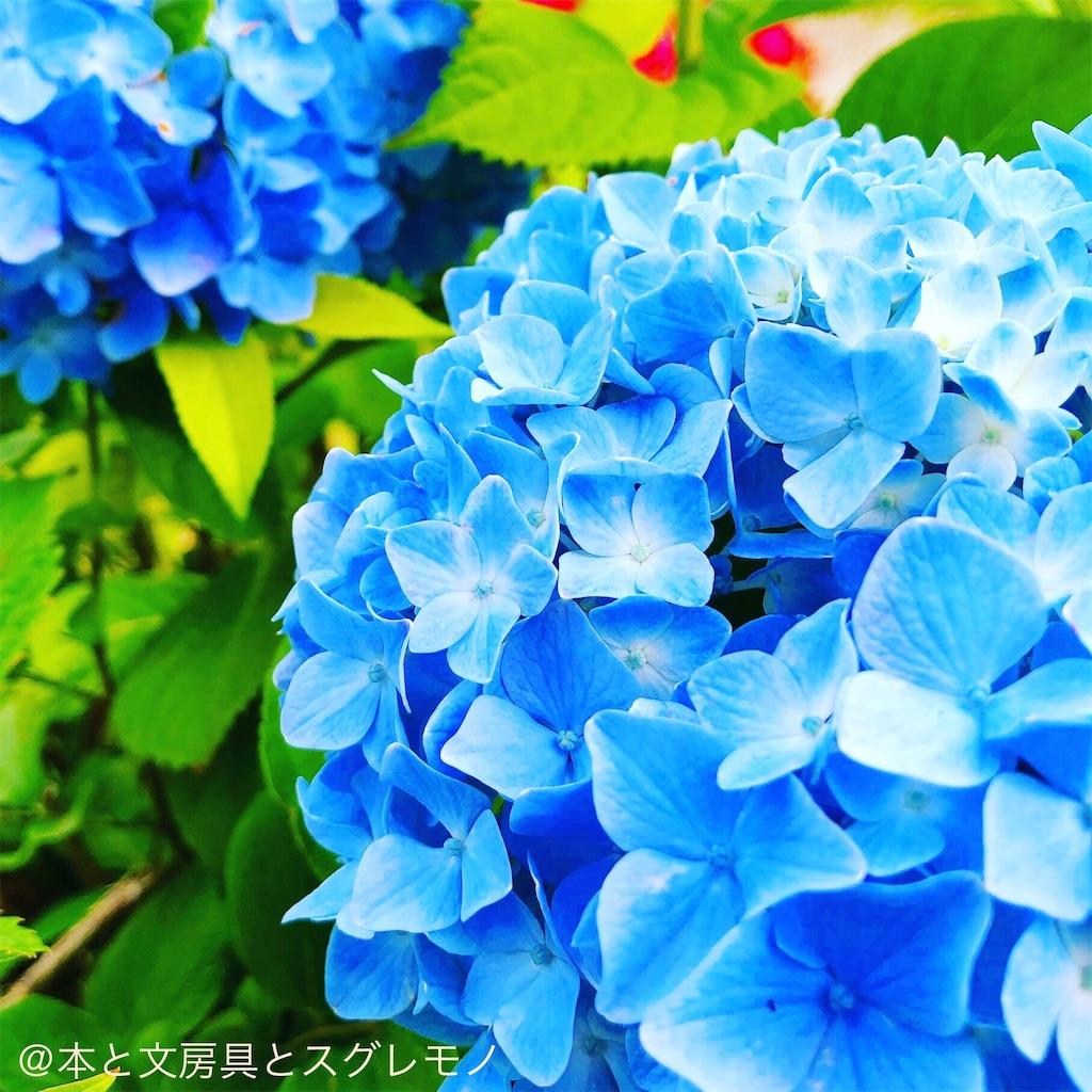 f:id:fumihiro1192:20190604174103j:image