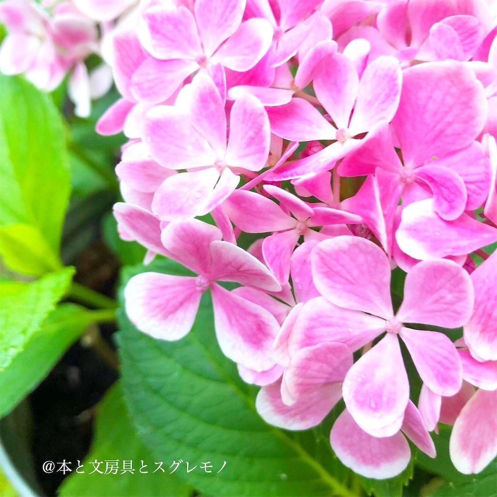 f:id:fumihiro1192:20190615200638j:image
