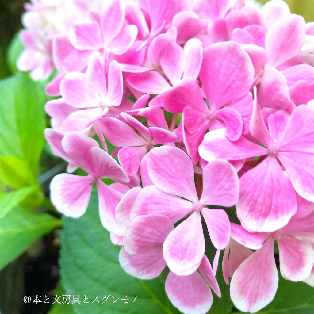 f:id:fumihiro1192:20190615200701j:image