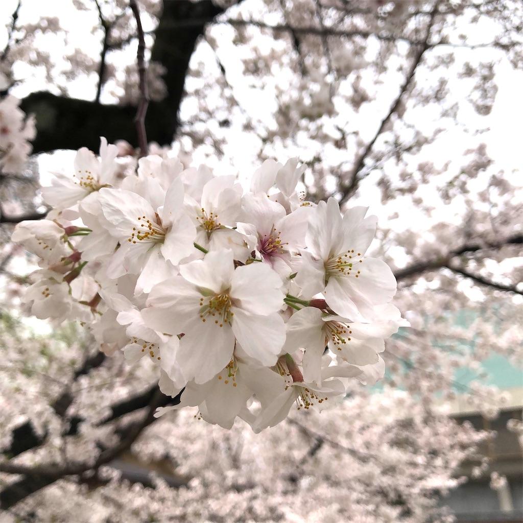 f:id:fumihiro1192:20210329191204j:image