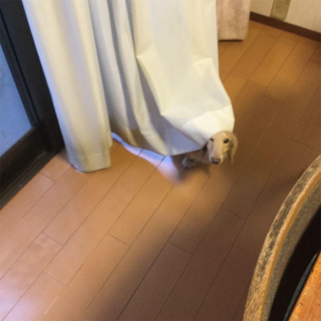 f:id:fumino_ya:20181008100104j:image