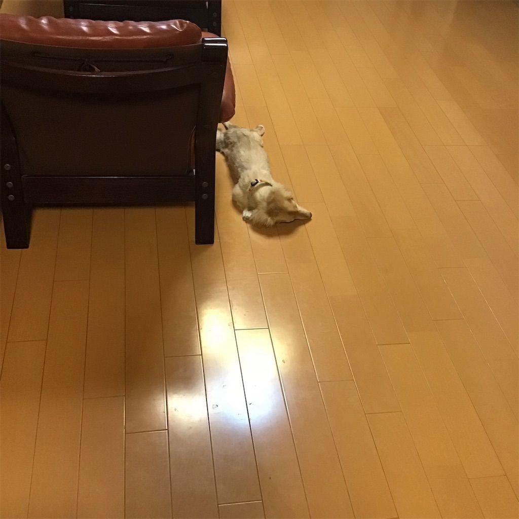 f:id:fumino_ya:20181008100744j:image
