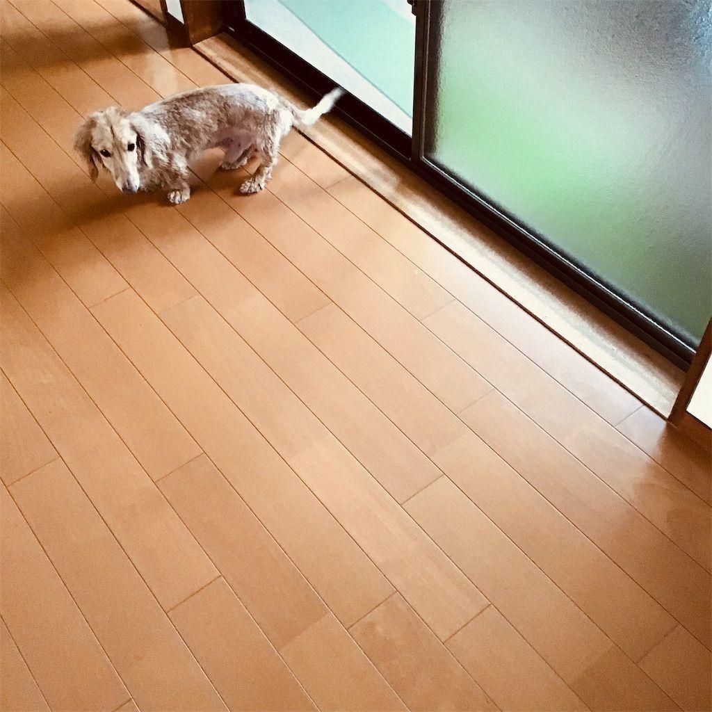 f:id:fumino_ya:20190202200556j:image