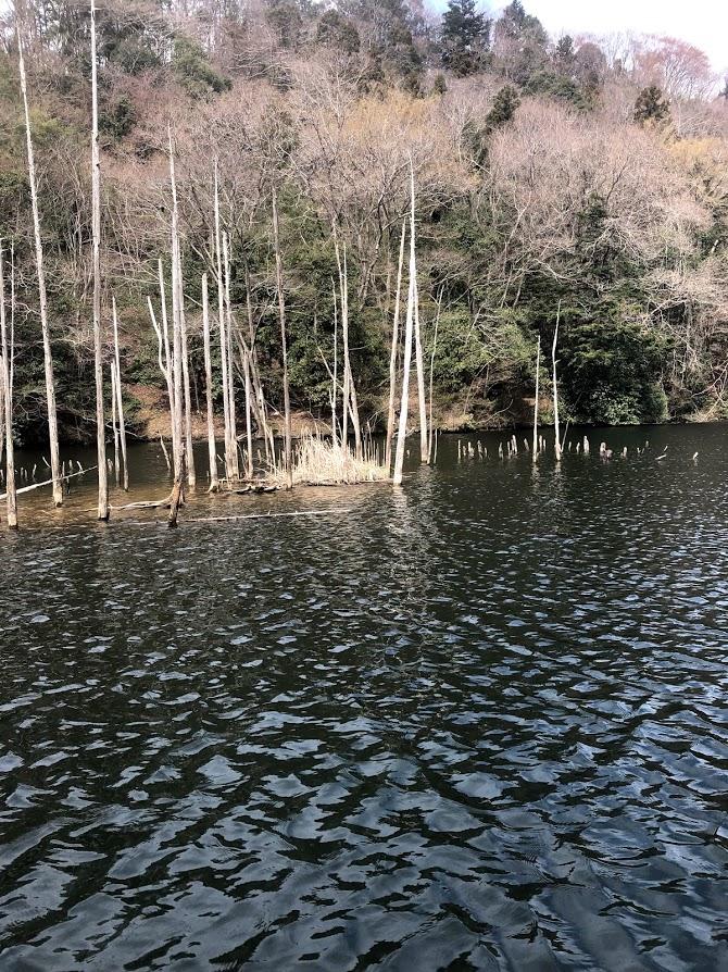 f:id:fumitaka-siro:20190406225904j:plain