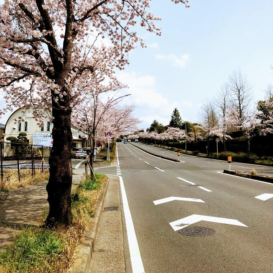 f:id:fumitaka-siro:20190408204435j:plain